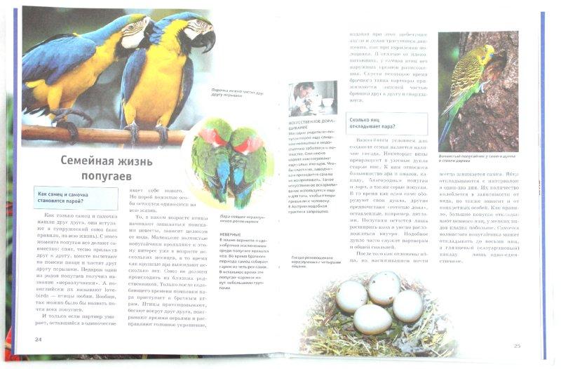 Иллюстрация 1 из 16 для Попугаи - Петра Даймер-Шютте | Лабиринт - книги. Источник: Лабиринт