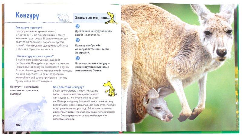 Иллюстрация 1 из 7 для Почему дельфины улыбаются? Животные в вопросах и ответах | Лабиринт - книги. Источник: Лабиринт
