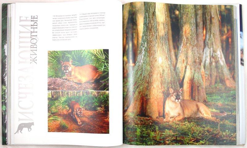Иллюстрация 1 из 28 для Исчезающие животные - Болонья, Касале, Катулло, Конти, Роза, Фочесато, Гуй, Исненжи, Рокко | Лабиринт - книги. Источник: Лабиринт