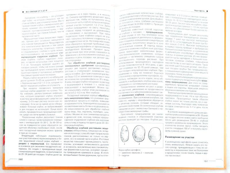 Иллюстрация 1 из 7 для Всё об овощах - Лудилов, Иванова | Лабиринт - книги. Источник: Лабиринт