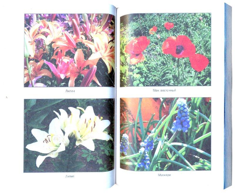 Иллюстрация 1 из 12 для Шикарный цветник из многолетников. Для тех, кому некогда - Наталия Алешина   Лабиринт - книги. Источник: Лабиринт