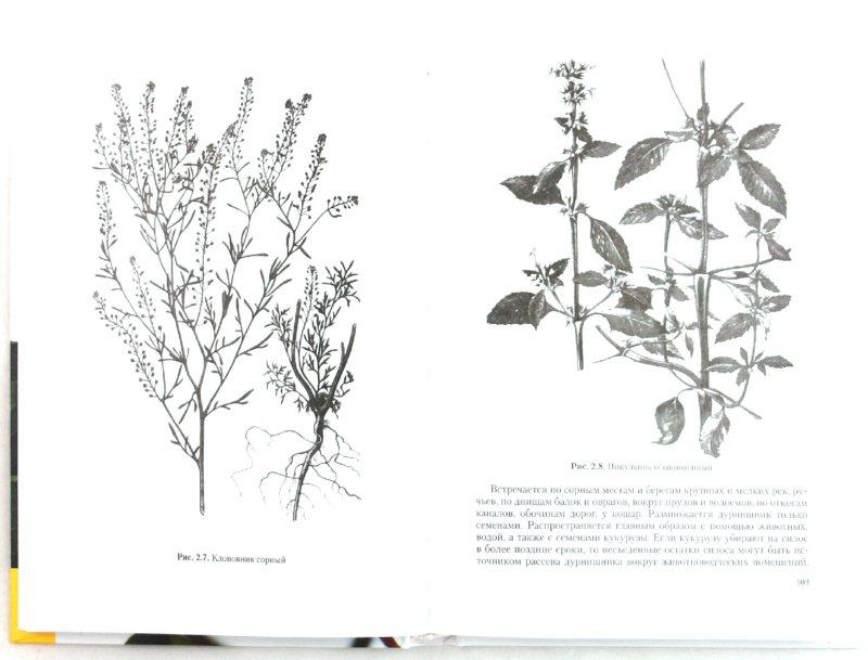 Иллюстрация 1 из 7 для Полезные, вредные и ядовитые растения - Кузнецов, Надежкин | Лабиринт - книги. Источник: Лабиринт