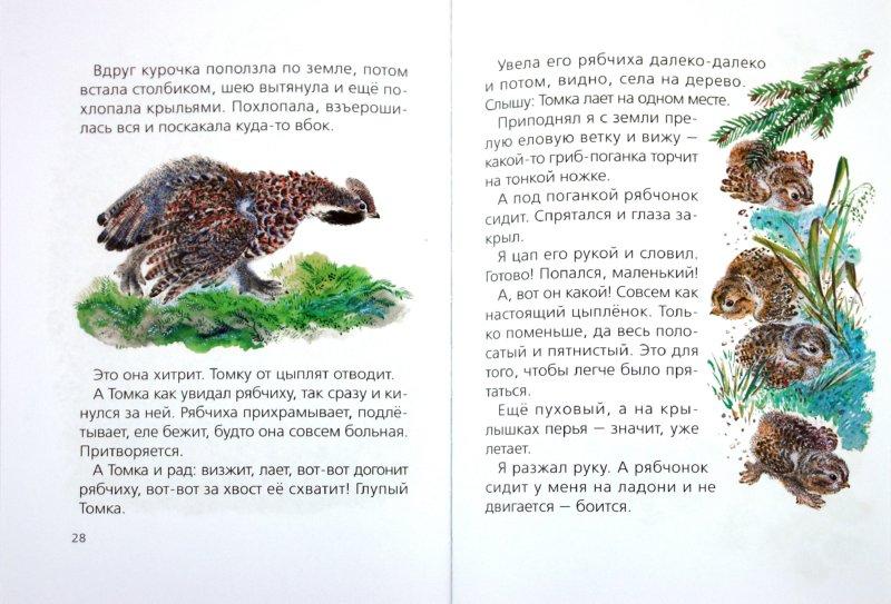 Иллюстрация 1 из 22 для Тюпа и Томка - Евгений Чарушин | Лабиринт - книги. Источник: Лабиринт