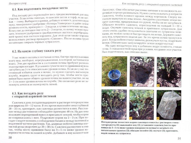 Иллюстрация 1 из 9 для Выращиваем розы на дачном участке - Нина Резвина | Лабиринт - книги. Источник: Лабиринт