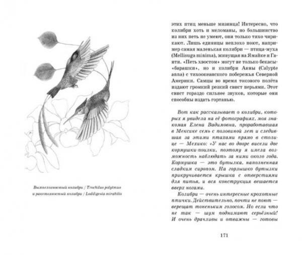 Иллюстрация 1 из 43 для О людях и птицах - Ольга Кувыкина | Лабиринт - книги. Источник: Лабиринт