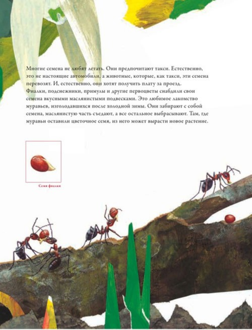 Иллюстрация 1 из 31 для По земле и по воздуху. Как путешествуют растения - Анне Меллер   Лабиринт - книги. Источник: Лабиринт