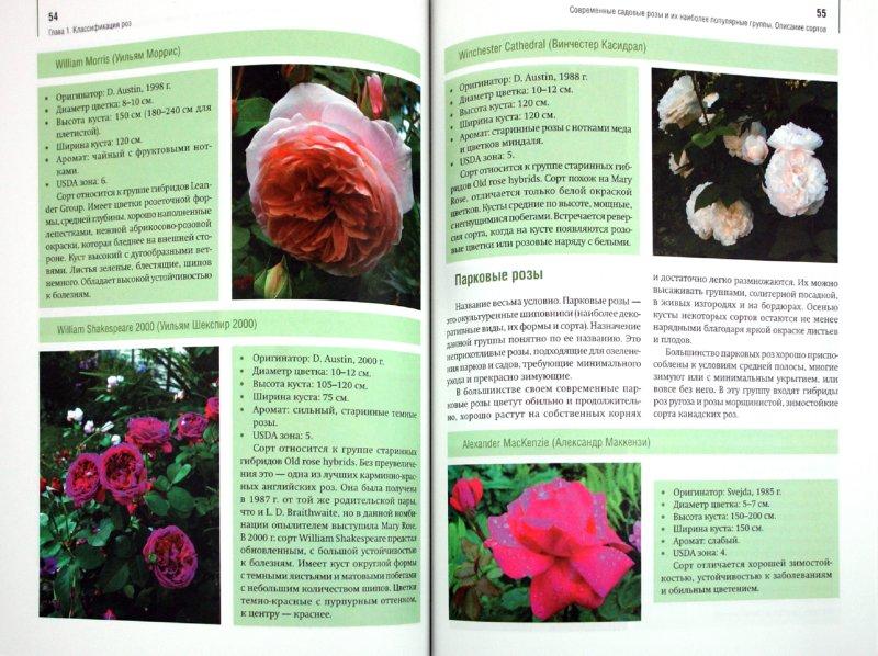 Иллюстрация 1 из 14 для Розы в вашем саду. Выбираем, ухаживаем, наслаждаемся - Тадеуш, Недялков | Лабиринт - книги. Источник: Лабиринт