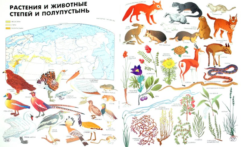 Иллюстрация 1 из 21 для Географический атлас: Мир и Человек | Лабиринт - книги. Источник: Лабиринт