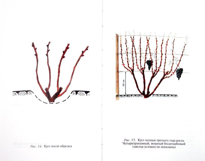 Иллюстрация 1 из 5 для Календарь виноградаря - Темный, Темная | Лабиринт - книги. Источник: Лабиринт