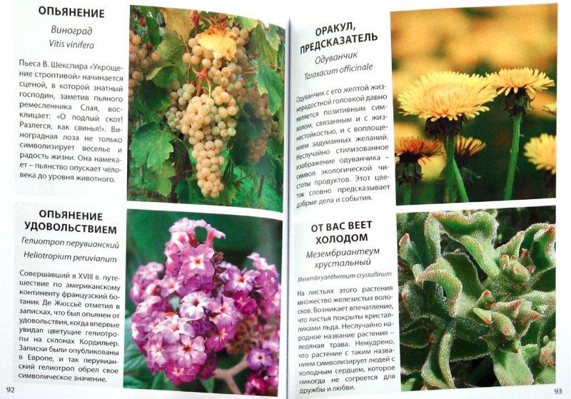Иллюстрация 1 из 19 для Язык цветов | Лабиринт - книги. Источник: Лабиринт