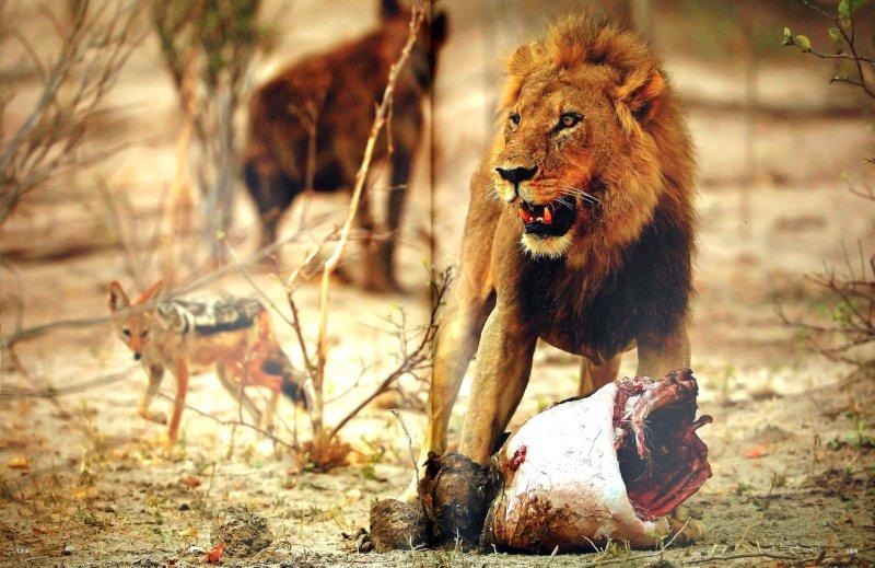 Иллюстрация 1 из 3 для Africa - Michael Poliza | Лабиринт - книги. Источник: Лабиринт