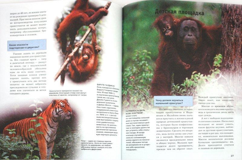 Иллюстрация 1 из 29 для Человекообразные обезьяны - Витус Дрешер   Лабиринт - книги. Источник: Лабиринт