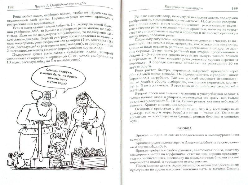Иллюстрация 1 из 14 для Новые идеи для сада и огорода - Галина Кизима | Лабиринт - книги. Источник: Лабиринт