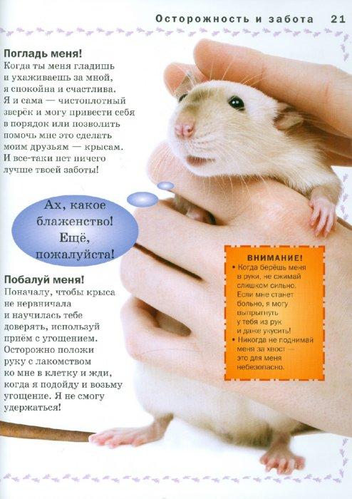 Иллюстрация 1 из 6 для Крыса - Мэтью Рейнер | Лабиринт - книги. Источник: Лабиринт