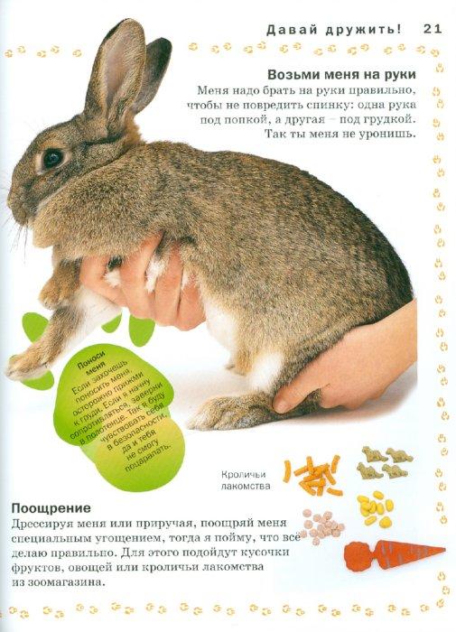 Иллюстрация 1 из 22 для Кролик - Мэтью Рейнер | Лабиринт - книги. Источник: Лабиринт