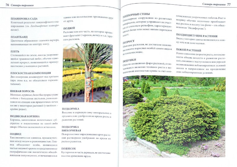 Иллюстрация 1 из 2 для Справочник ландшафтного дизайнера - Александр Сапелин | Лабиринт - книги. Источник: Лабиринт
