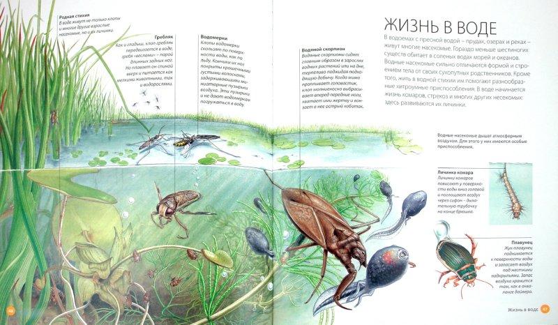 Иллюстрация 1 из 19 для Насекомые и пауки | Лабиринт - книги. Источник: Лабиринт