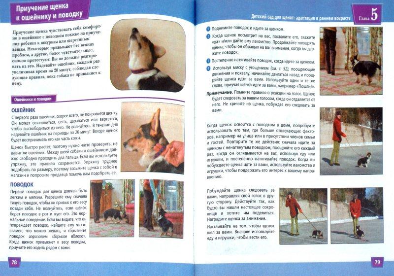 Иллюстрация 1 из 20 для Дрессировка собак. Визуальное пособие - Сара Ходсон | Лабиринт - книги. Источник: Лабиринт