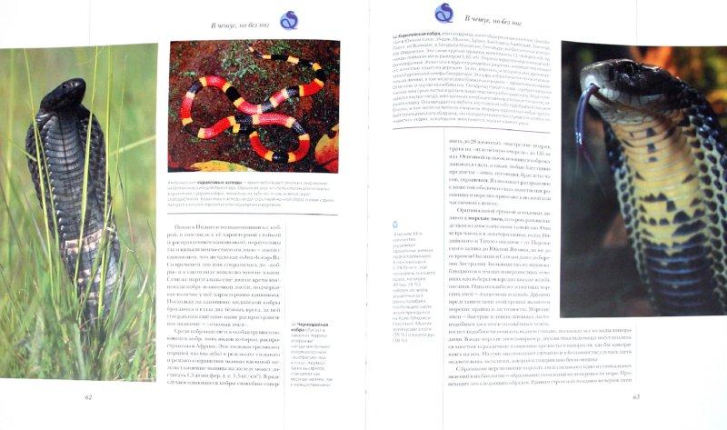 Иллюстрация 1 из 20 для Рептилии. Амфибии - Дунаев, Кауров, Михайлов | Лабиринт - книги. Источник: Лабиринт