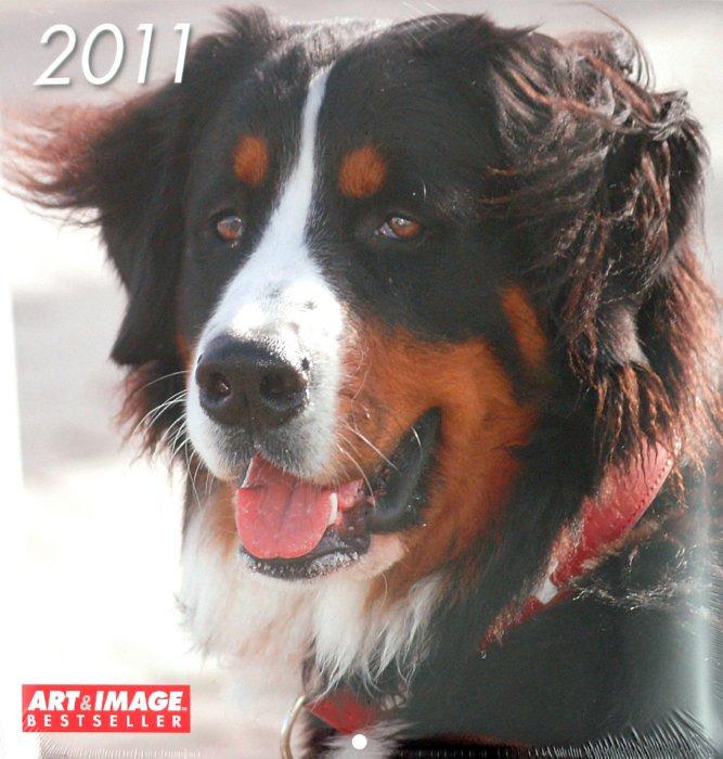 """Иллюстрация 1 из 2 для Календарь 2011 """"Собаки"""" (4432-8)   Лабиринт - сувениры. Источник: Лабиринт"""