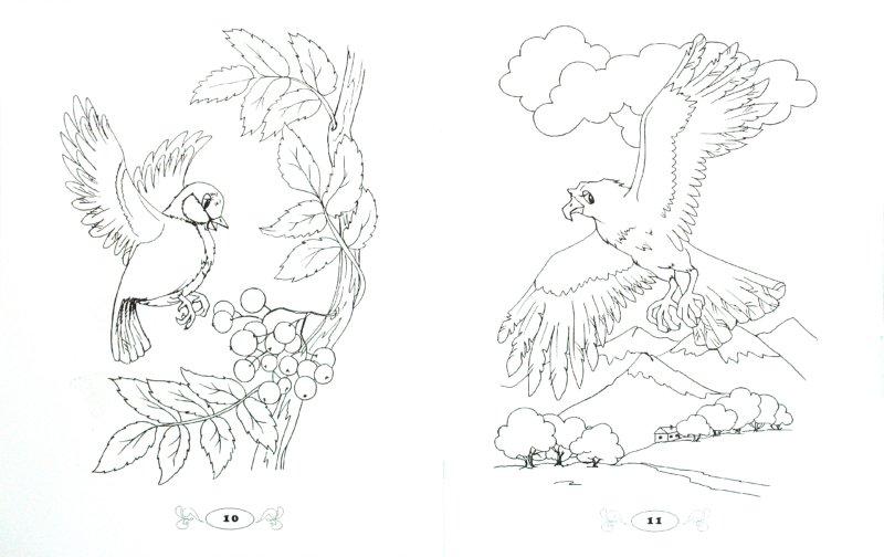 Иллюстрация 1 из 4 для Кто летает всех быстрее: раскраска | Лабиринт - книги. Источник: Лабиринт