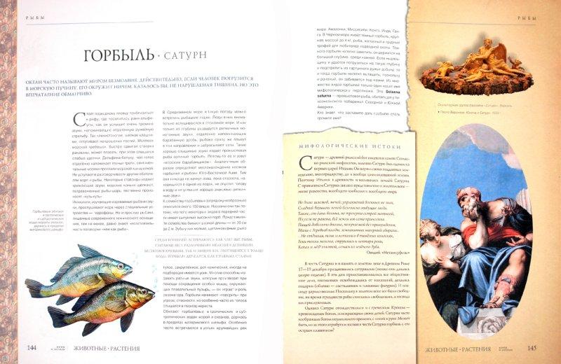 Иллюстрация 1 из 19 для Животные, растения. Мифы и легенды - Бабенко, Алексеев, Белова | Лабиринт - книги. Источник: Лабиринт