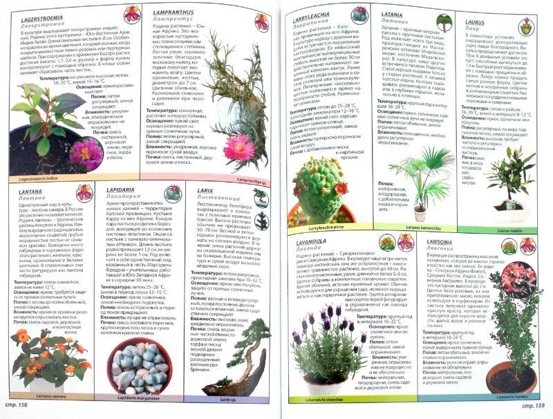 Иллюстрация 1 из 4 для Иллюстрированная энциклопедия. Все комнатные растения   Лабиринт - книги. Источник: Лабиринт