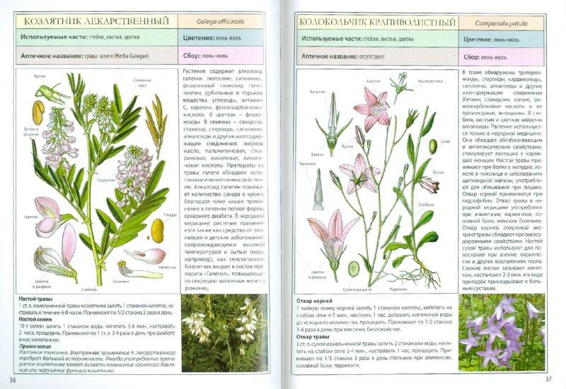 Иллюстрация 1 из 5 для Мини-энциклопедия. Лекарственные растения | Лабиринт - книги. Источник: Лабиринт