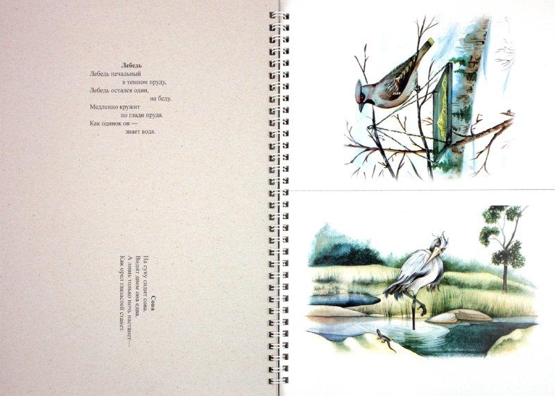 Иллюстрация 1 из 17 для Картотека предметных картинок. Выпуск 9. Домашние, перелетные, зимующие птицы - Наталия Нищева | Лабиринт - книги. Источник: Лабиринт