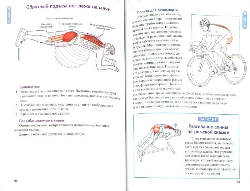 Иллюстрация 1 из 16 для Анатомия велосипедиста - Шеннон Совндаль | Лабиринт - книги. Источник: Лабиринт