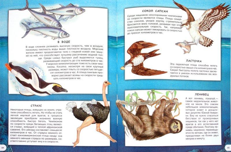 Иллюстрация 1 из 24 для Загадки животного мира - Элеонора Барзотти   Лабиринт - книги. Источник: Лабиринт
