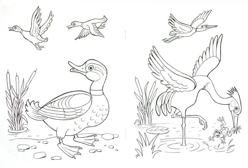 Иллюстрация 1 из 10 для Кто летает в небе? - Т. Коваль   Лабиринт - книги. Источник: Лабиринт