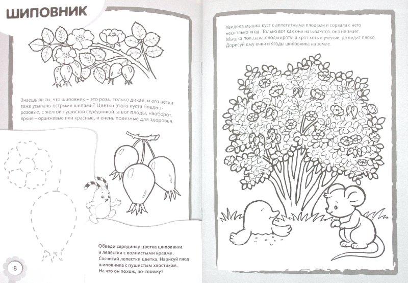 Иллюстрация 1 из 6 для Рисуем и раскрашиваем кустарники | Лабиринт - книги. Источник: Лабиринт