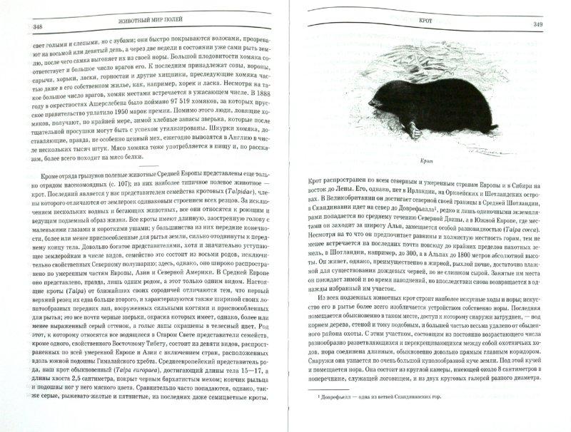 Иллюстрация 1 из 43 для Животный мир. Его быт и среда. В 3 томах - Вильгельм Гааке | Лабиринт - книги. Источник: Лабиринт