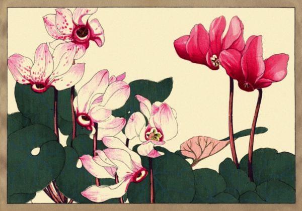 Иллюстрация 1 из 39 для Цветы Конана Танигами. На почтовых открытках   Лабиринт - книги. Источник: Лабиринт