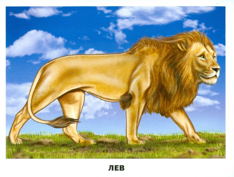 Иллюстрация 1 из 36 для Обучающие карточки. Животные Африки | Лабиринт - книги. Источник: Лабиринт