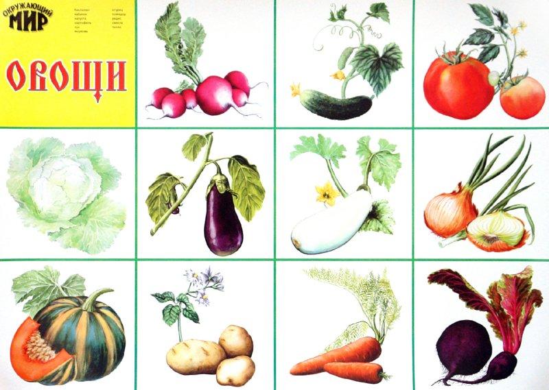 """Иллюстрация 1 из 4 для Плакат """"Овощи"""" (546) (50х70см)   Лабиринт - книги. Источник: Лабиринт"""