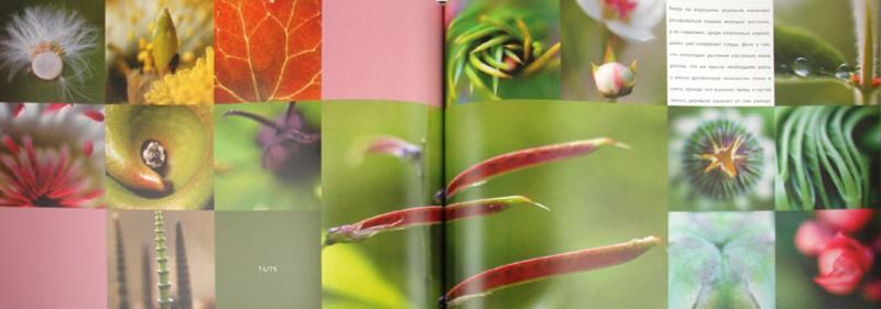 Иллюстрация 1 из 37 для Фотоальбом: 136 полос весны | Лабиринт - книги. Источник: Лабиринт