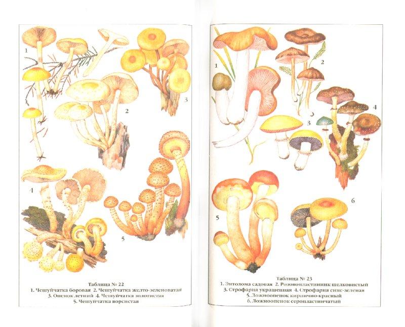 Иллюстрация 1 из 3 для Справочник грибника - Клепинина, Клепинина | Лабиринт - книги. Источник: Лабиринт