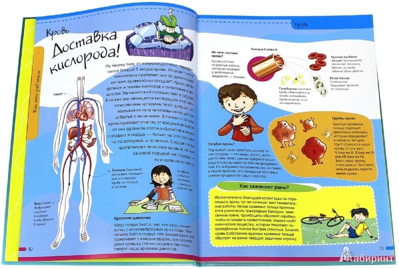 Иллюстрация 1 из 55 для Тело человека. Нескучная анатомия - Алехо Родригес-Вида | Лабиринт - книги. Источник: Лабиринт