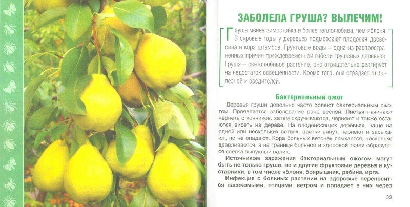 Иллюстрация 1 из 8 для Вредители и болезни сада - Лукьянова, Кудрявец, Игошина | Лабиринт - книги. Источник: Лабиринт