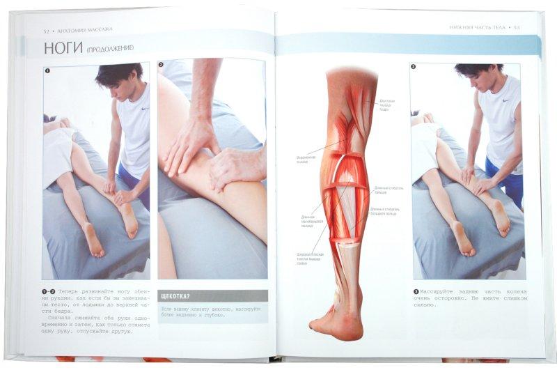Иллюстрация 1 из 11 для Анатомия массажа - Эллсуорт, Олтман   Лабиринт - книги. Источник: Лабиринт