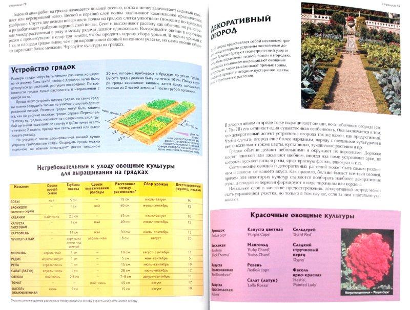 Иллюстрация 1 из 40 для Все об экологическом садоводстве - Дэвид Хессайон | Лабиринт - книги. Источник: Лабиринт