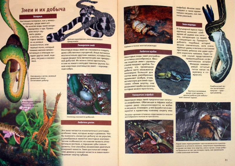Иллюстрация 1 из 32 для Змеи - Дитмар Мертенс | Лабиринт - книги. Источник: Лабиринт