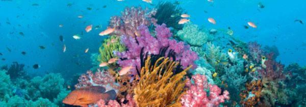"""Иллюстрация 1 из 4 для Puzzle-2000 """"Коралловый риф"""" (29402)   Лабиринт - игрушки. Источник: Лабиринт"""