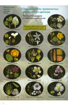 Определитель травянистых растений по цветкам. Растения водоемов и заболоченных лугов