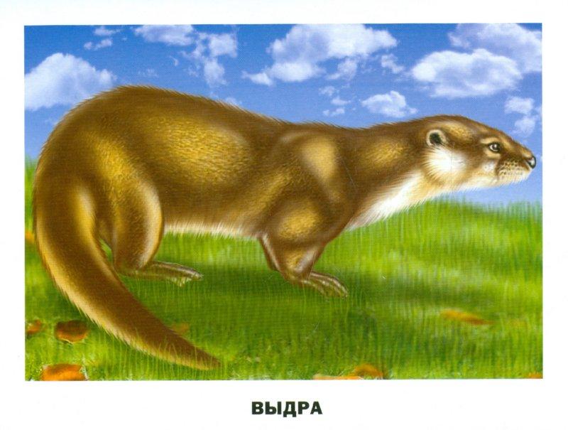 Иллюстрация 1 из 18 для Животные Северной Америки (16 карточек) | Лабиринт - книги. Источник: Лабиринт