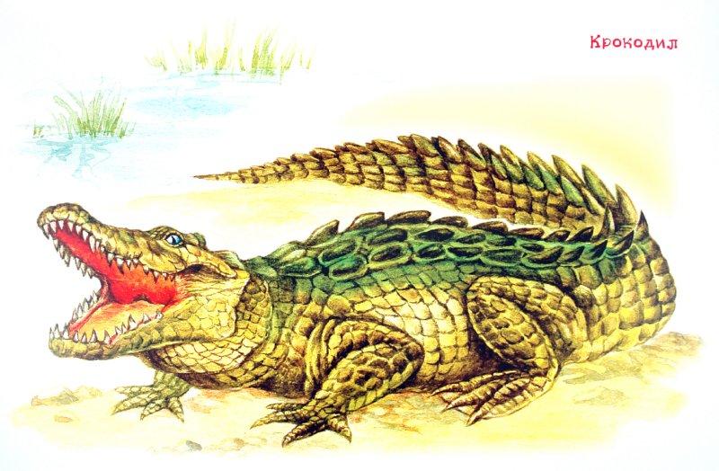 Иллюстрация 1 из 6 для Животные жарких стран | Лабиринт - книги. Источник: Лабиринт