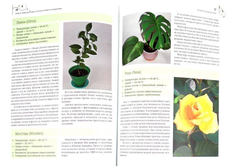 Иллюстрация 1 из 9 для Цветы на балконе и лоджии - Анастасия Скворцова | Лабиринт - книги. Источник: Лабиринт