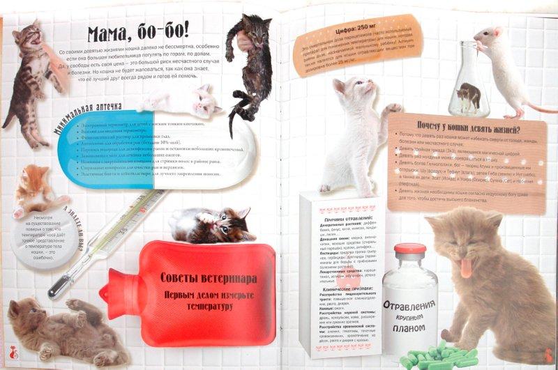 Иллюстрация 1 из 41 для Кошки. Подарок для всех, кто влюблен в кошек - Жан Кювелье | Лабиринт - книги. Источник: Лабиринт